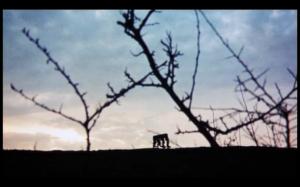 Screen Shot 2014-10-09 at 6.09.00 PM